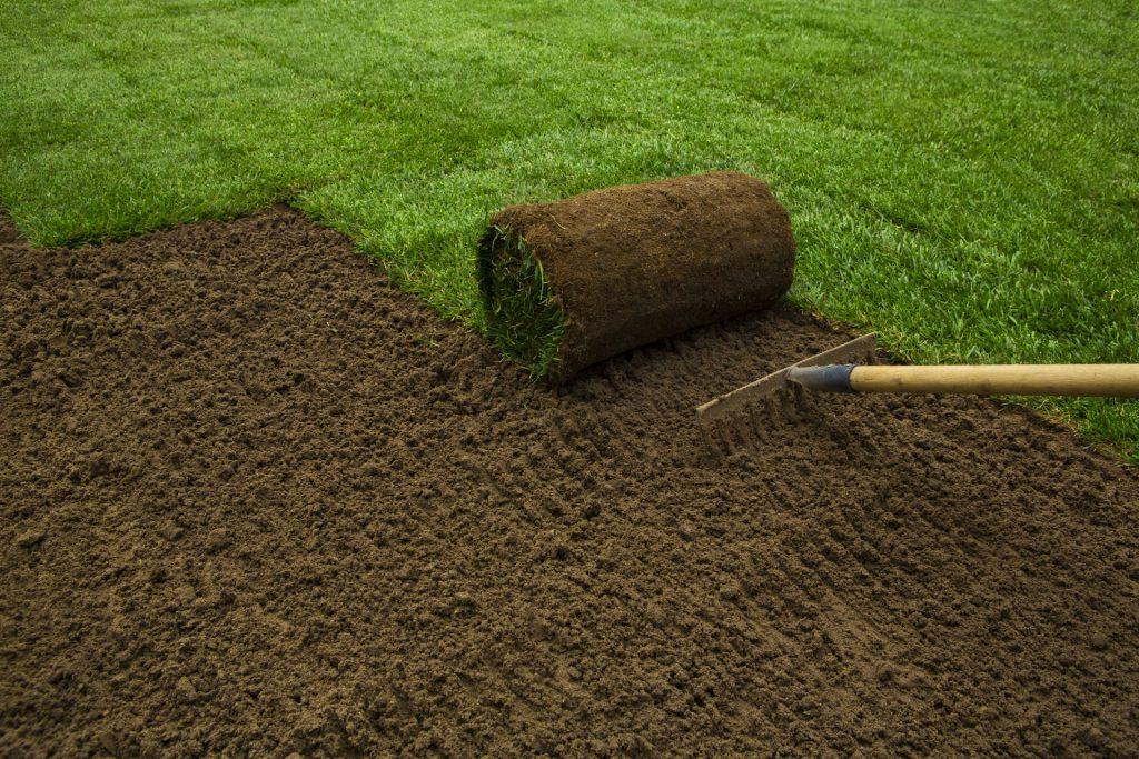 läggning av rullgräs