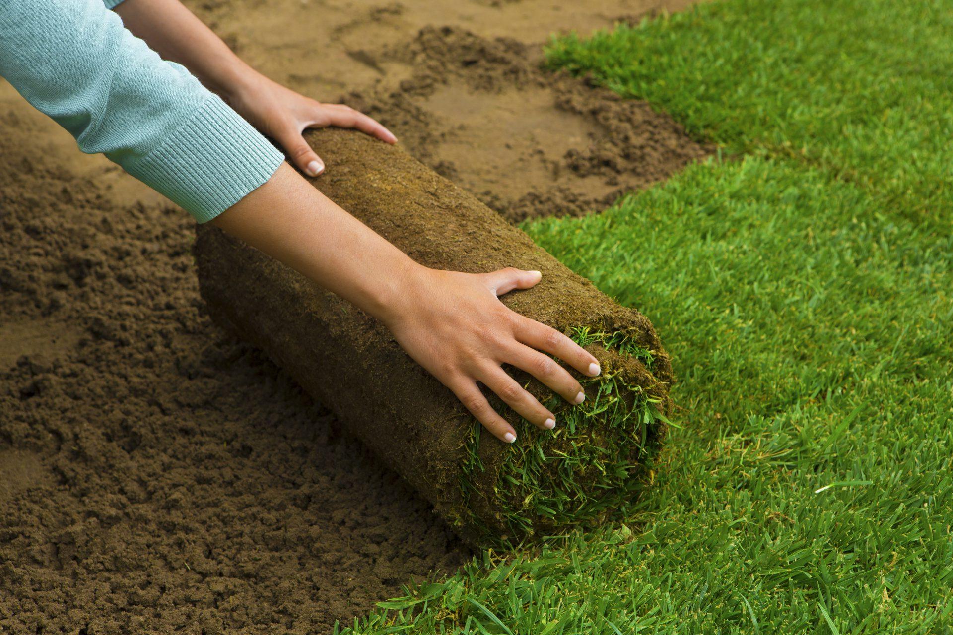 Händer rullar ut rullgräs